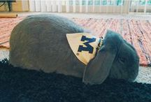 Michigan Pets / Wolverines come in all shapes and sizes. Celebrating the furry friends in our lives.