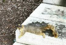 Michigan Squirrels / The unofficial mascot of the University of Michigan; Ann Arbor is home to our furry friends!