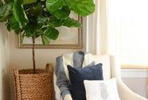 HOME: INDOOR PLANTS / by Rachael Renee