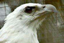 eagles / by Diane Reid