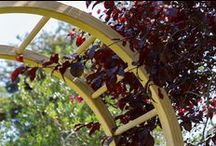 Arches & Arbours / A collection of garden Arches from Grange Fencing