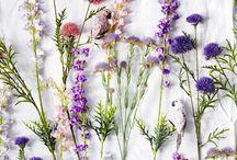 Greenies & flowers