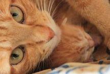 Orange Cat ♥ / by Magda veloso