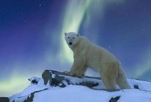 Aurora Borealis / by Big Owl