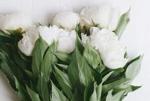 Floral | White Blooms / Flowers, not diamonds, are a girls best friend <3