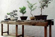 garden&bonsais / by Matouseks world