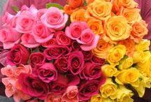 CT Grown Roses