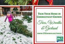 CT Grown Christmas Trees