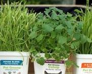 Pet Greens: Catnip, Grass & More / Bring the outdoors inside with pet greens! Pet grass is healthy and enjoyable for cats, dogs, hamsters, guinea pigs, rabbits, ferrets, and many other pets. should be a part of their diet and life. Learn how to grow a DIY cat garden, which can feature many different kind of plants — rye, oat, barley, fresh catnip, and wheat grass.