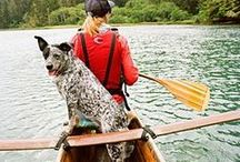 Fun Pet Activities / Whether you have a cat, dog, or another type of pet, there are so many fun activities you can enjoy together. This board is full of ideas and tips for fun pet activities as well as opportunities to socialize your pet. Learn how to leash train your cat, improve your dog's recall, take your pet camping, or even do pet yoga — the possibilities are endless!