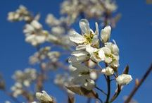 Flowering Trees / Spring, Summer, Fall & Winter. We have trees that bloom in any season.