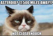 Grumpy Cat!!! / Τις λατρευω αυτες τις εικονες ΚΑΙ τις γατες,οποτε.... :)