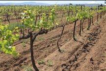Blog del Vino