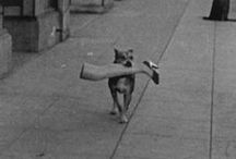 Street Photo/Animals