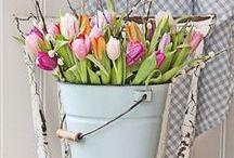 ☮ Spring