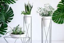 Növénytartó - Plant stand