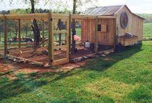 chicken coop - tips & ideas