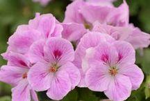 Favourite flowers