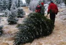 Juletradisjoner Christmas traditions in Norway / Baking og pynt og forberedelser og nytelse