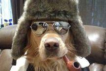 Uma paixão! #cães
