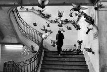 Os Lisboetas / Chamam-se assim os habitantes de Lisboa, mas também há quem os trate por alfacinhas.A credita-se que durante o domínio muçulmano já se plantavam alfaces pelas colinas de Lisboa. Este foi também o único alimento que restou aos lisboetas durante um dos muitos cercos que a cidade sofreu. Eis algumas imagens de lisboetas.