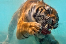 Deadly animals / Deadly animals from around the world - maxanimal.com