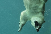 Underwater / Amazing underwater pictures.  Check out maxanimal.com for more pictures and videos.