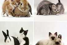 ♡ { Adorable Animals Lover } ♡  / by C ℯ ℓ i n a ♡ ℰ ℯ