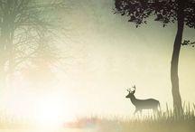 Nature / Licht en sprankeling