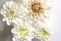 Anna Olkis Sugar Flowers / Sugar flowers