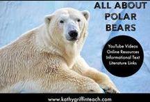 ( ijs) beren
