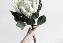 Flora. / Flora.