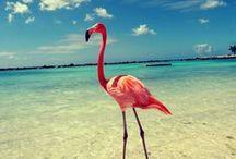 Curacao | adventure