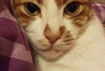 Cats and my cat tarçın / Tarçın