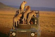 .: safari :.