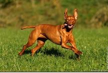 Hunde Fotografien - dog pics by Johnny Krüger