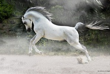 Pferde Fotografien - horse pics by Johnny Krüger