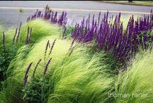 Garden Aspirations