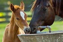 Horses, ponies, mules / by Nancy Landfried