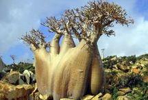 Trees / by Nancy Landfried