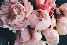 Flowers & green ✽