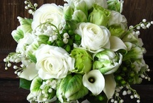 green and lush / Naturally organic with bright and deep green foliage.  This board is for florals and foliage in all variances of the color green.