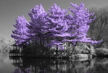 Trees / by Tiffany Dardis