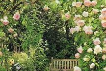 Rose Gardens to Envy / A collection of beautiful rose gardens from around the world.
