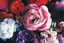 Flowers / Flowers and plants I like.