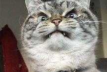 animal:ネコ