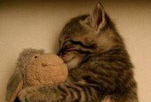 Kreischalarm! / Die süßesten Bilder, die wir im Netz auftreiben können