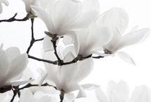 White & Ivory