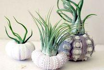 Succulents, airplants, cactus / Succulent and airplant, creative pots, cactus decor