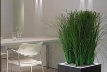 Floor Plants and Planters